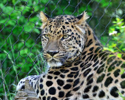 Fenced but still Regal by PaulWeber