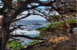 Point Lobos #7 by PaulWeber