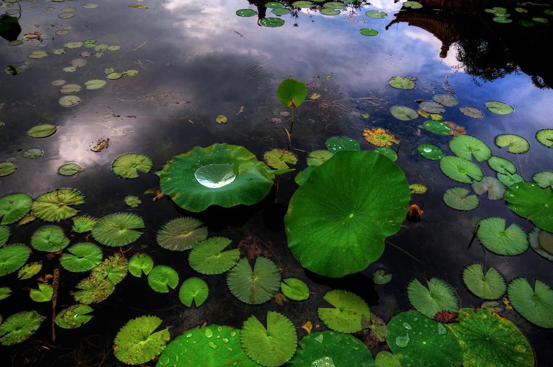 Water Lilies II by PaulWeber