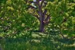 Oak by PaulWeber