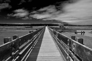 Across the salt marshes