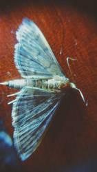 moth by Rockills