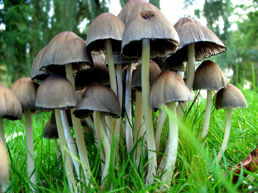 mushrooms by hippykitty on deviantart