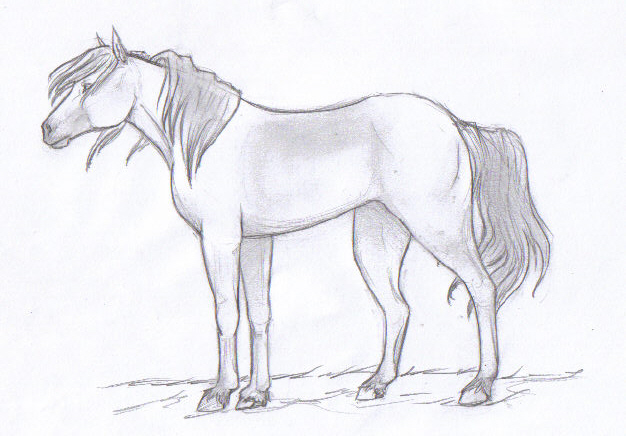 Horse sketch by gabiealvadiaz