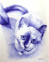 Unwanted - Cat/Kitten, Pen on Paper, 2017