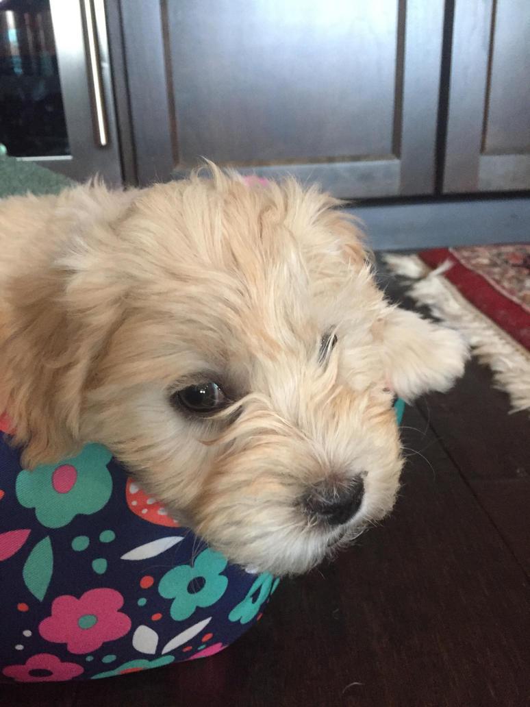 Mah new puppy by peril-clay