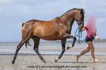 Bay horse trot stock 3