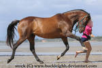 Bay horse trot / canter stock