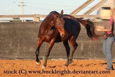 Bay horse trotting / bending stock