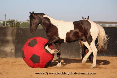Tobiano horse trotting stock