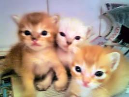 Kittens by miratsuki