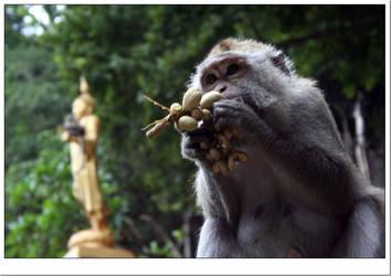 Gazing monkey