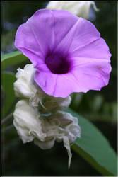 Solo un fiore