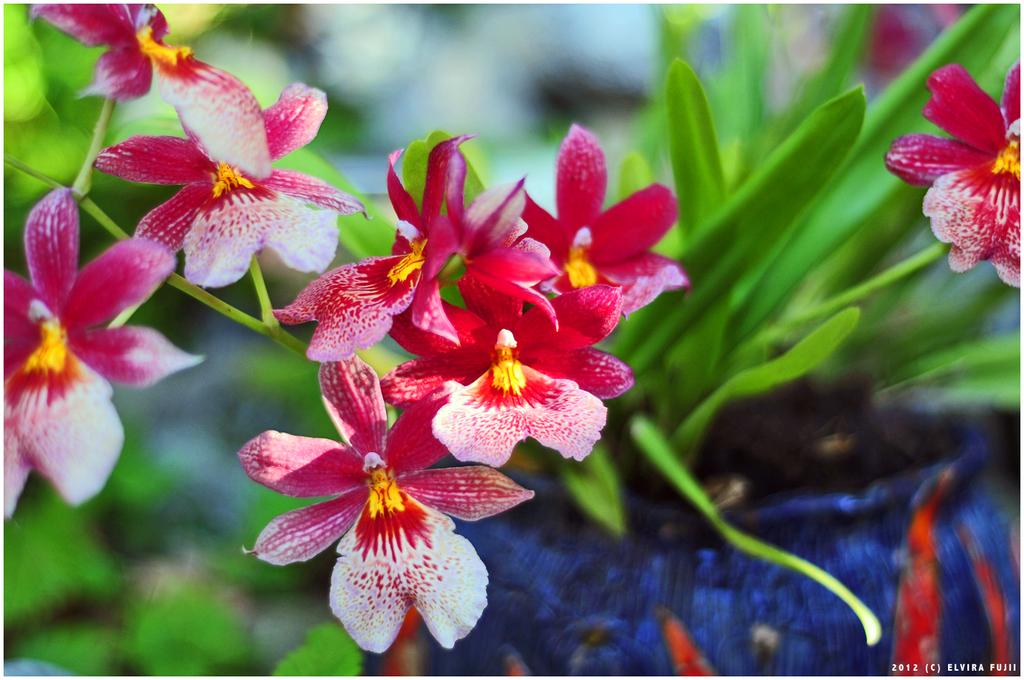 red garden flowers by fiji fujii on deviantart