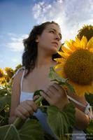 Yoko - Sunflower glory by shunara