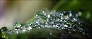M3127 - Green dew.