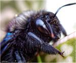 M4365 - The bumblebee Valentine's Day.