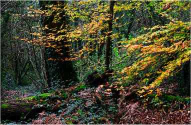 L1852 - Last light of Autumn.