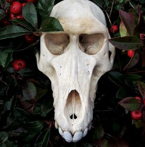 WendigoIllustration's Profile Picture