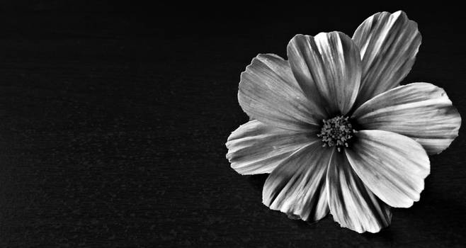 A White Flower.