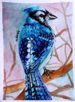 ACEO-Jaybird by atorife