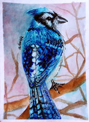 ACEO-Jaybird by atorife