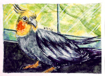ACEO-Parrot by atorife