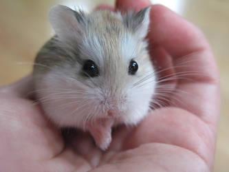 Hamster Scheming by Spirit1998