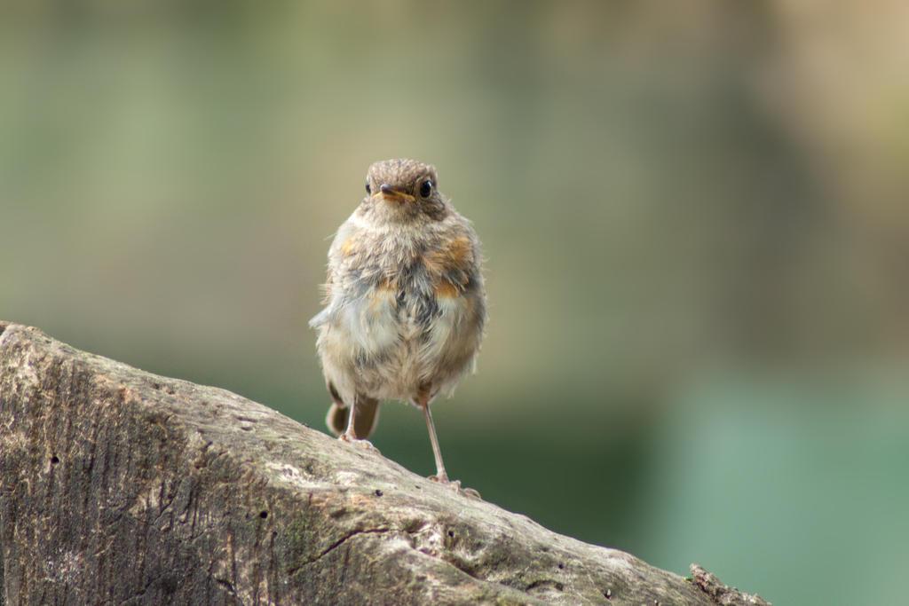 Bird by AWhisperOfLove