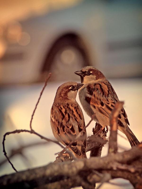 Urban Birdies by 666GirL666