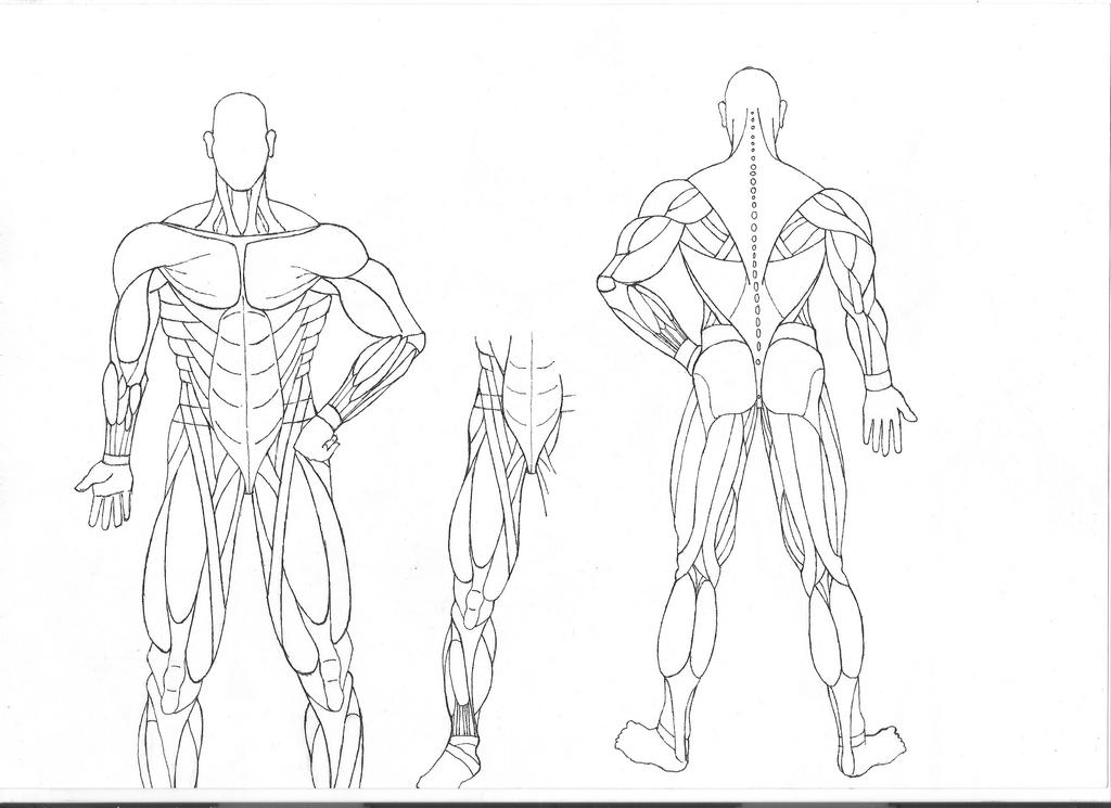 back anatomy coloring pages - photo#8