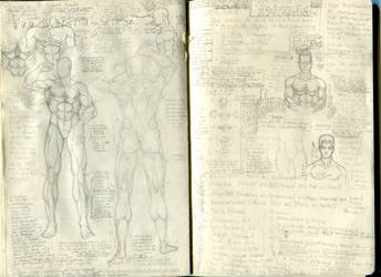 Anatomy Muscles and Notes by Shindoh