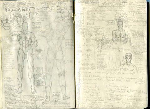 Anatomy Muscles and Notes