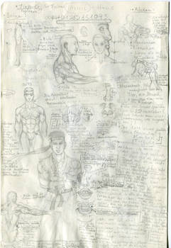 Anatomy Muscles and Notes II