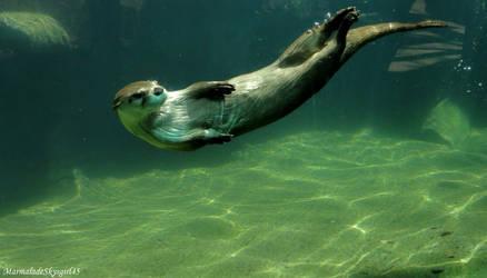 Come swim with me by MarmaladeSkysGirl45