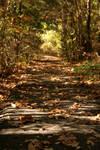 Fall Pathways IV by yadayada1616