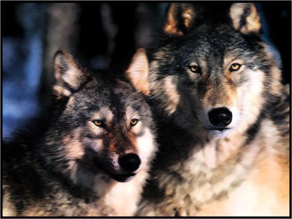 Wolves by EBl00d