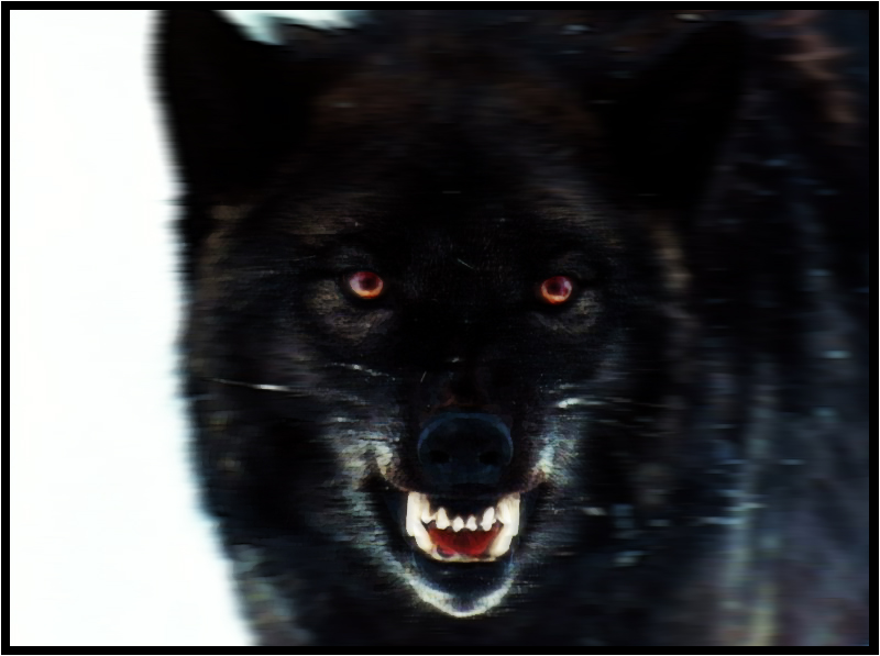 Official Character List Black_Wolf_by_EBl00d