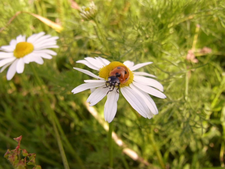 Little Ladybird by starry-girl