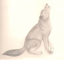 Random Pencil Sketch - wolf by Miku-Nyan02