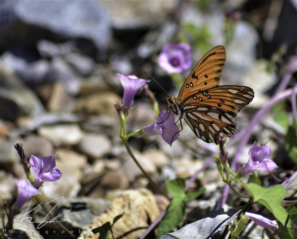 .:Invertebrate Tiger:.