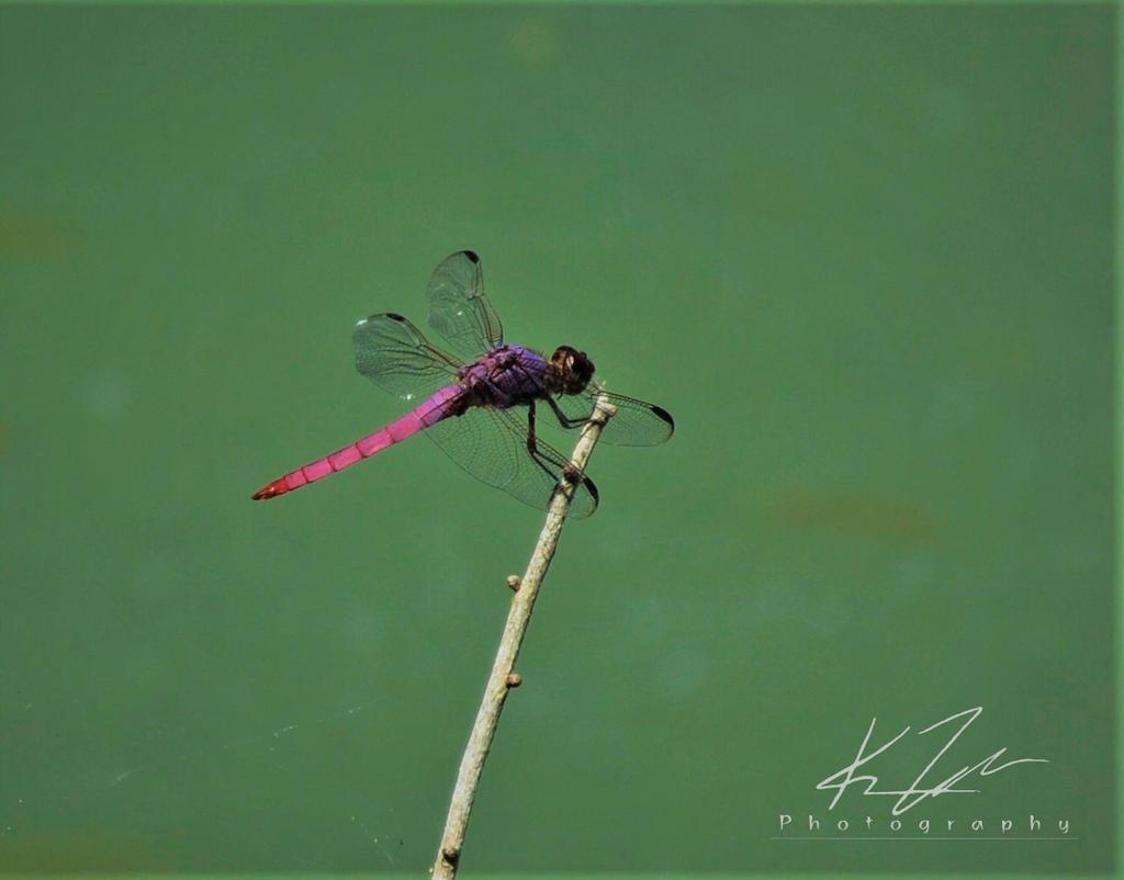 .:Natural Pink:.