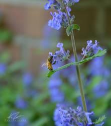 .:Pollen Thief:. by SolaraOkami
