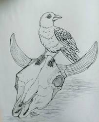 Cowbird, Cow Skull.