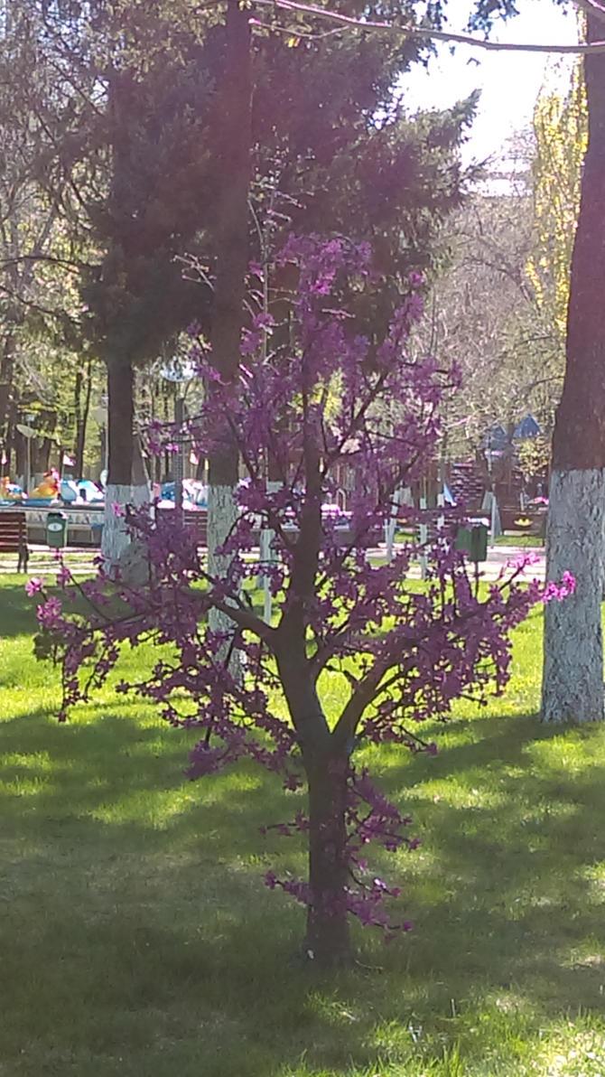 purple tree  by KuRoHyOu16