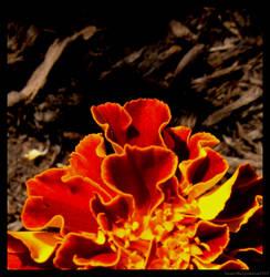 Sunrise Flower. by SweetMelpomene