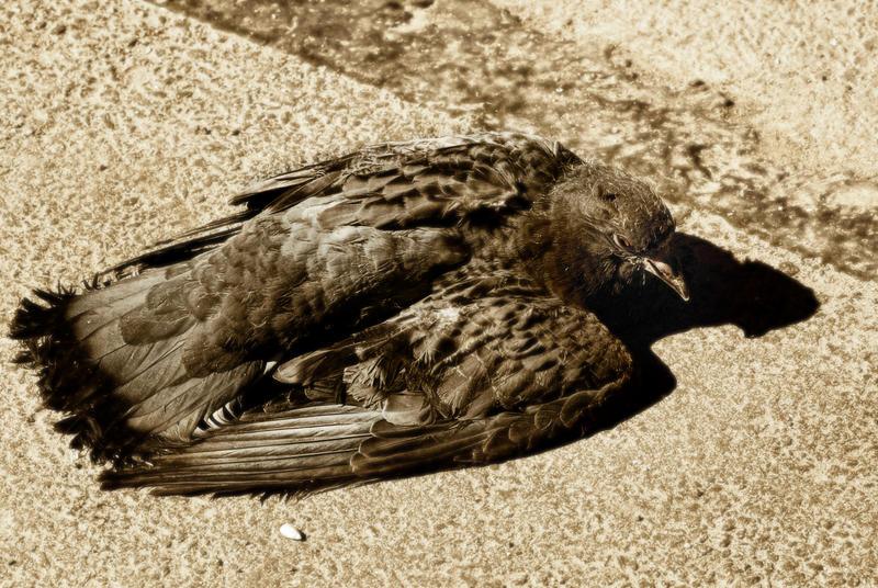 Broken Wings by xrust