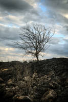 Burned Ground by xrust