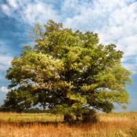 Oak by xrust