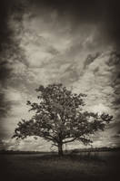 Old Oak BW by xrust